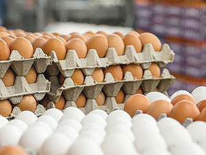Egg production is expected to decline during 2019-20.