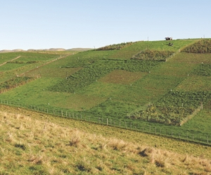Pastures to boost hill country production