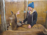 Deer farming and photography – all in a day's work