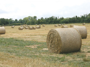 In practice, silage is often not made at the optimal time, and little attention is paid to the silage-making process.
