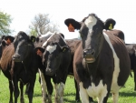 Academy to train dairy leaders
