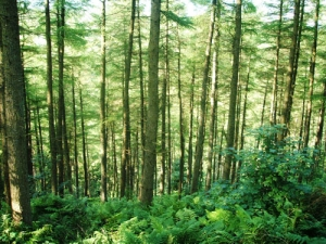 Revised ETS may boost carbon forestry