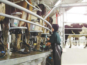 FE can cost dairy farmers at least $100,000 each year in lost milk production.