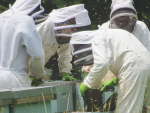 Beekeepers struggle as honey money gets sticky