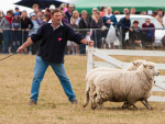 Mackenzie Highland A&P Show cancelled