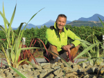 Growing oasis at Staete Landt vineyard
