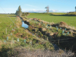 Riparian planting and fencing around waterway keep stock and pollutants out.