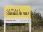 Another pea weevil free year will help