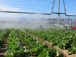 Irrigation scheme in the final stages