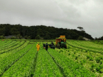 Farm investment opportunity opens