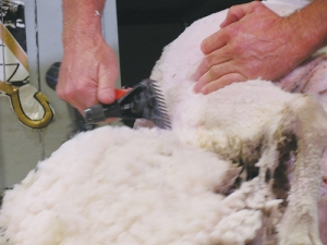 The $7.50/kg lambs wool contract on offer is $1.25/kg above last season's price.