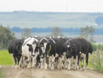 Sharemilkers and dairy herd owners are being advised to get their livestock sorted for the upcoming 'gypsy day' move.