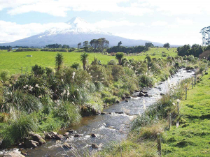 All existing Taranaki Regional Council riparian plan fencing can remain and will be accepted as compliant.