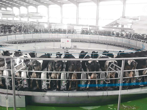 GEA has installed its DairyRotor T8900 on a Chinese farm milking 10,000 cows.