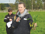 Laura Keenan, DairyNZ says plantain is not new to dairy cows.