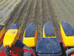 Band tillage machine designed to cut fodder beet establishment costs